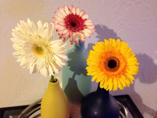 gerber daisies brightening my home
