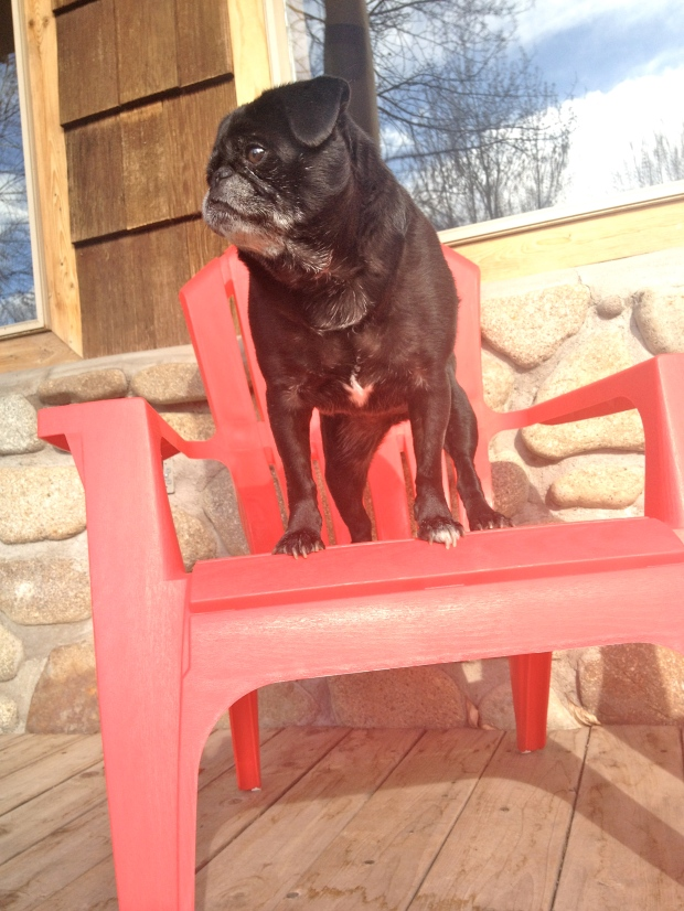 these chairs are amazing for enjoying sunday morning coffee & berries. the puggers concur.