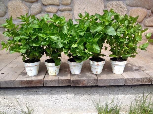 diy rustic planting pots