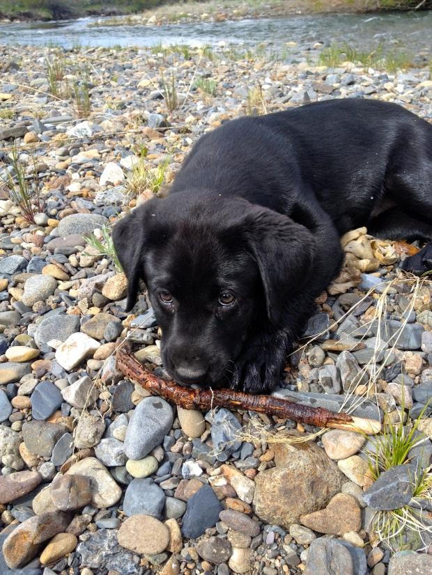 Miss Maude has a love affair with sticks