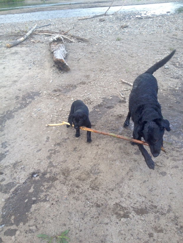big sticks are best for sharing
