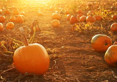 go to an epic pumpkin patch