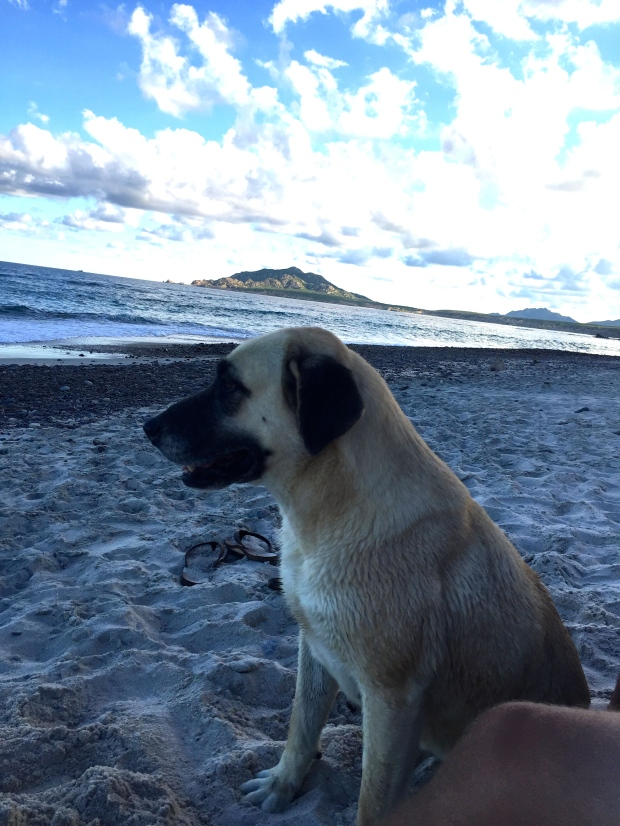papita, a cute dog that we befriended on the beach