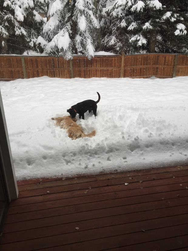 the girls making snow angels