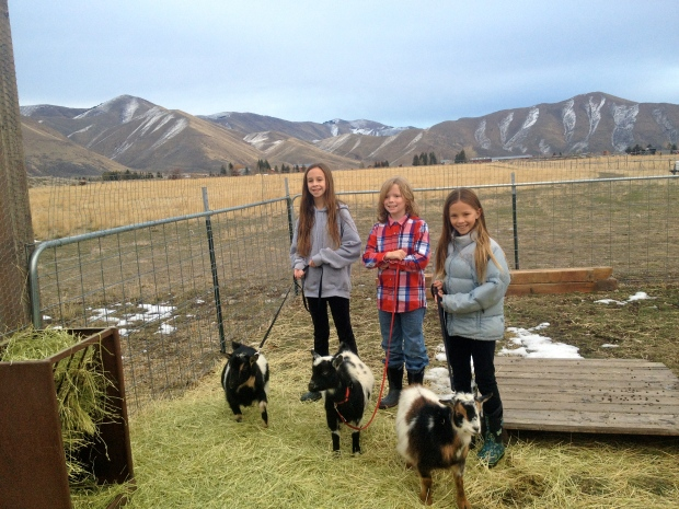 cousins & goats - it doesn't get much cuter than this