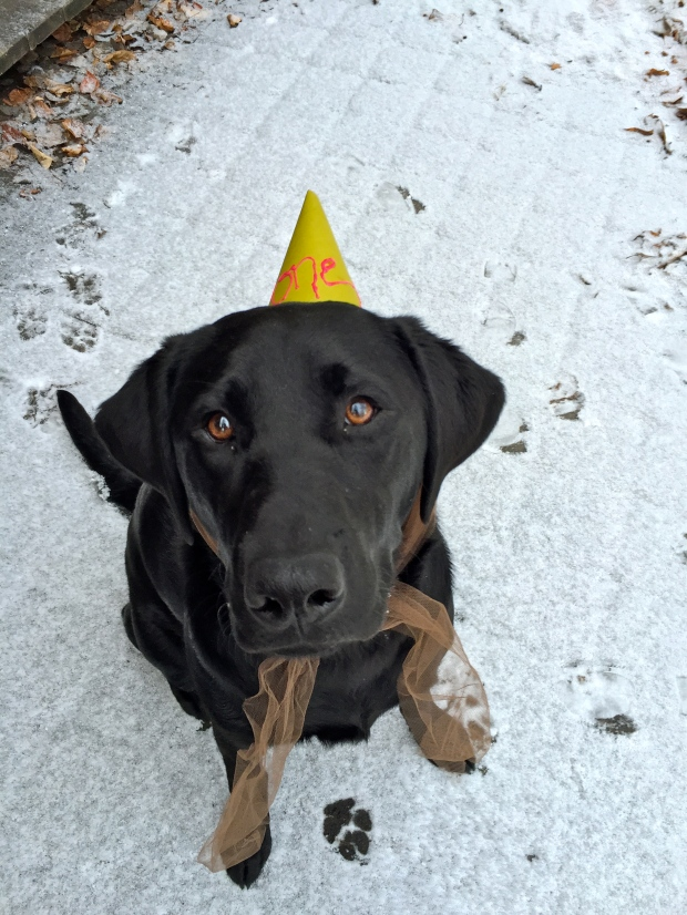 birthday hat that she tolerated with some serious bribing