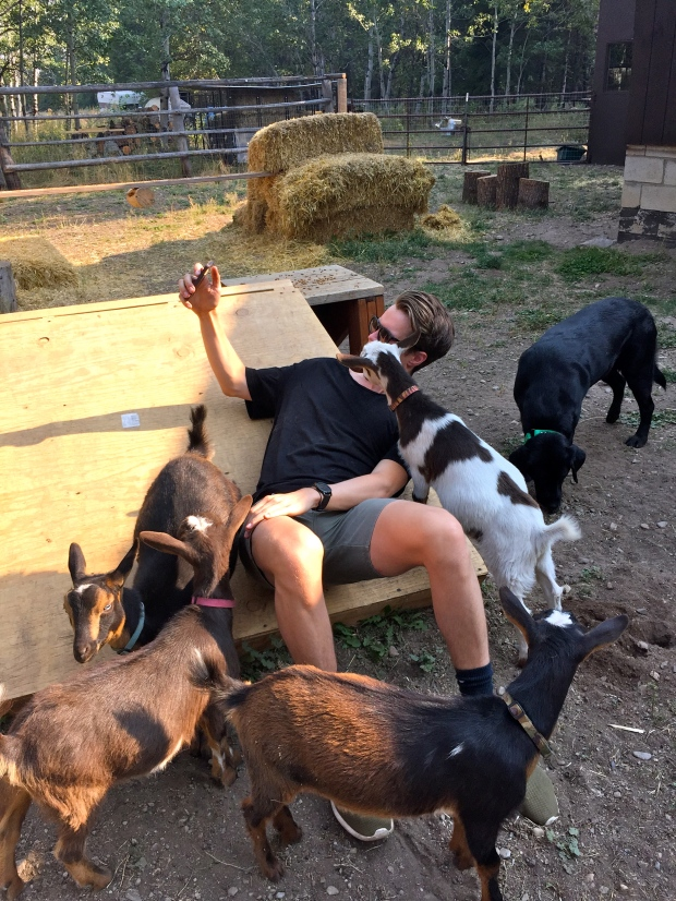 more goat selfies