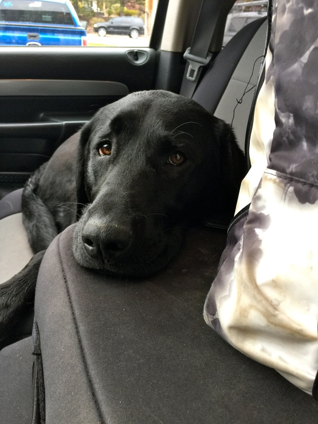 my favorite co-pilot