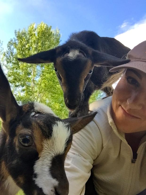 goat selfies
