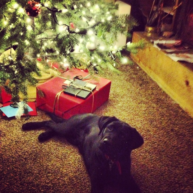 parley's first christmas under our first christmas tree