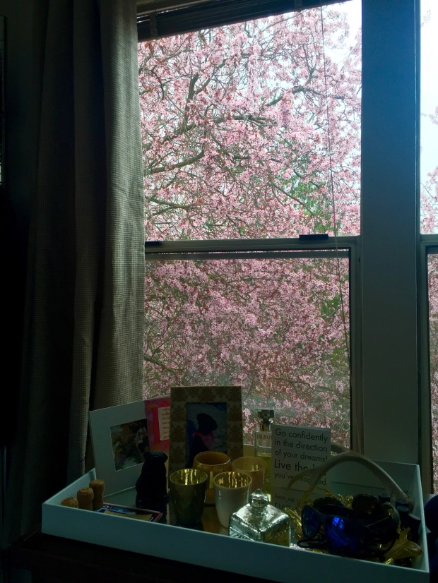 the view from my bedroom - so pink!