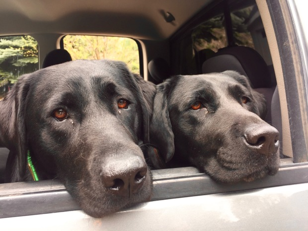 my favorite hiking buddies <3