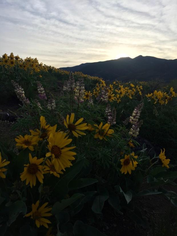 sunrise hikes